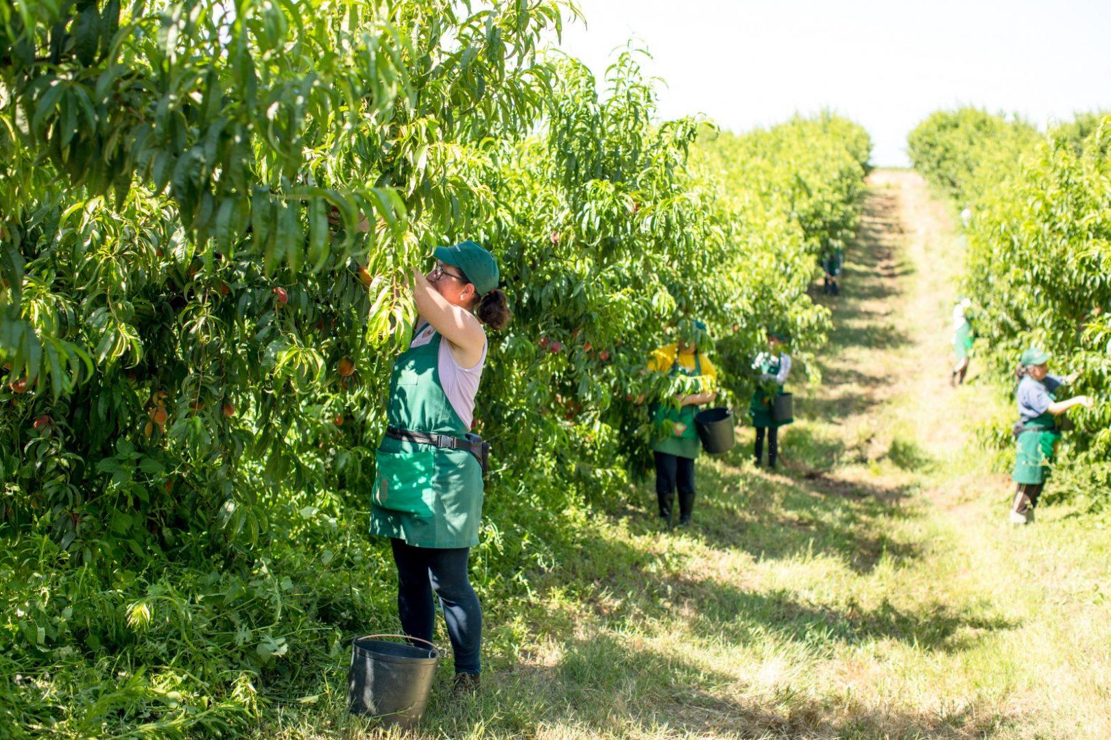 Exploração Frutícola